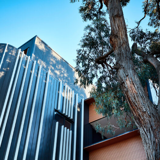 Bayswater Women's Housing detail view of apartment building with tree and shadow play - building photographer example / concept