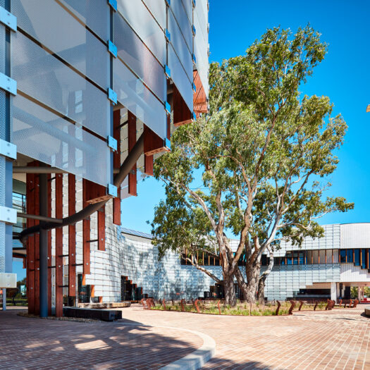 Springvale Library and Community Hub with tree around which building designed - structure photographer example / concept